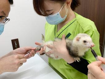 エキゾチック動物の診療日