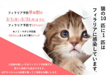猫フィラリア予防のご案内